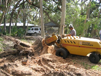 Stump Grinding on the Paoli
