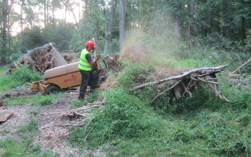 Stump grinding in West Chester