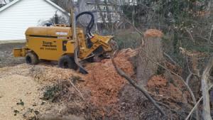 stump new grinder on big oak in creek